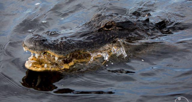 Tag 8 - EvergladesCity-KeyLargo-KeyWest